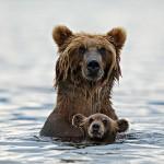 20 Tiernos Momentos en el Mundo Animal
