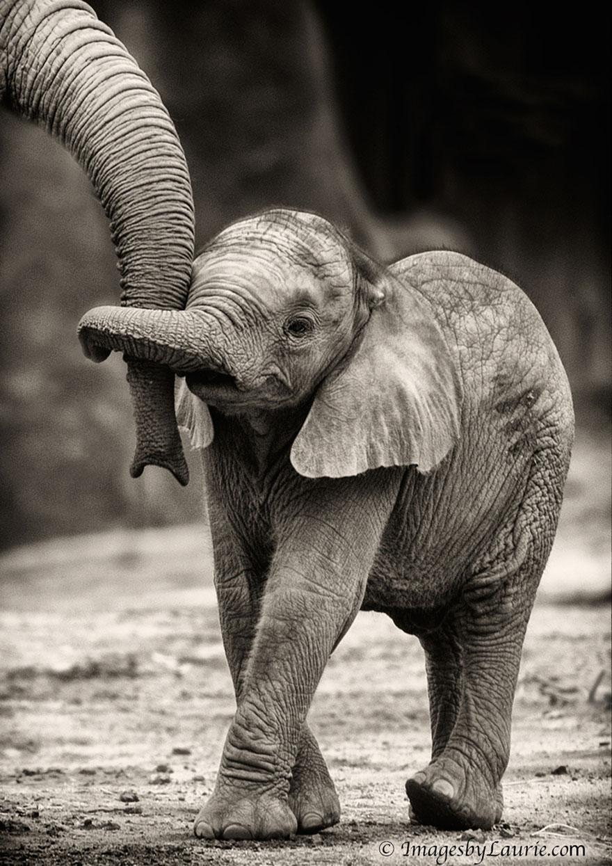 preciosos momentos-animal-parents-16