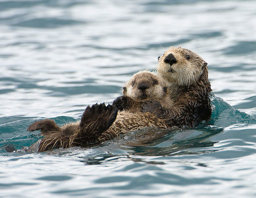 preciosos momentos-animal-parents-17