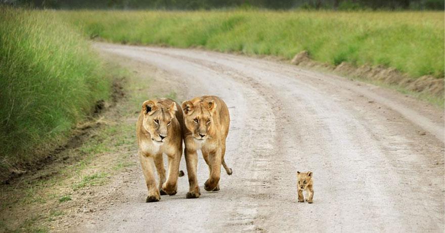 preciosos momentos-animal-parents-23
