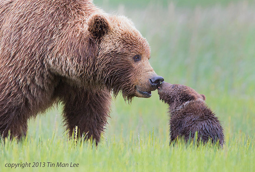 preciosos momentos-animal-parents-40
