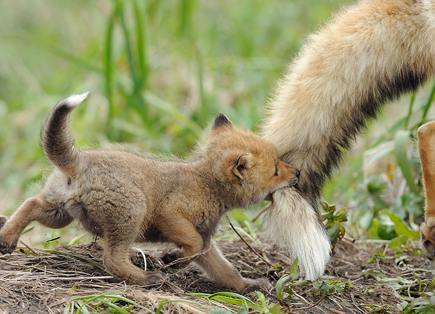 preciosos momentos-animal-parents-7