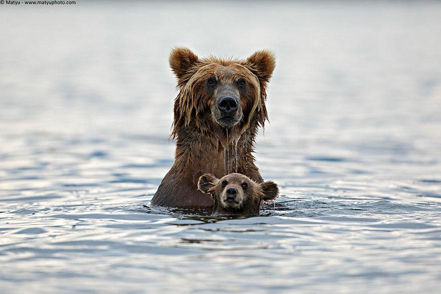 preciosos momentos-animal-parents-9