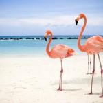 """Expo Foto Miami comienza la temporada 2015 presentando """"La calle  donde tu vives"""""""